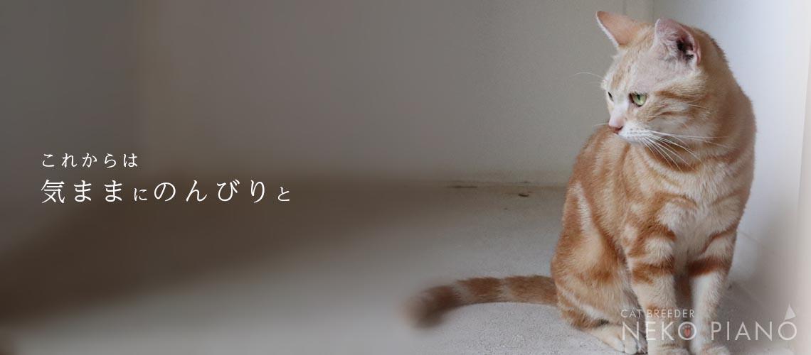猫 ブリーダー 東京